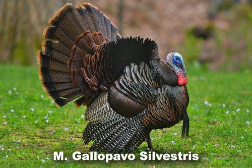 Turkey 600x400.jpg